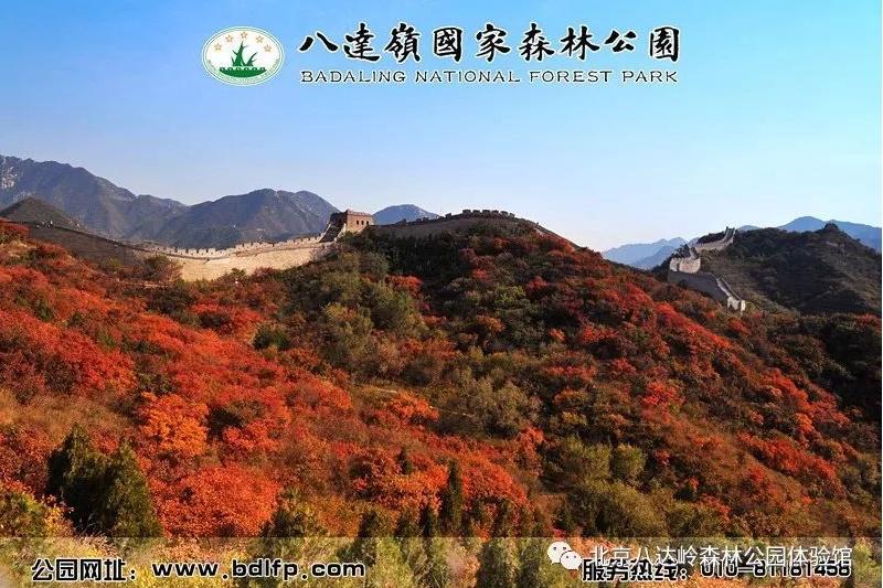 팔달령국가삼림공원 제12회 단풍생태문화제 개막