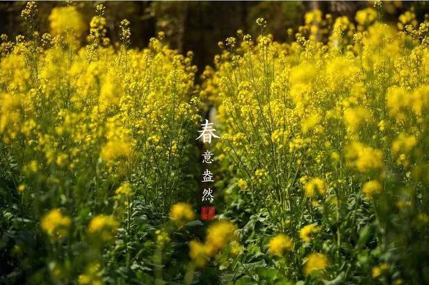 魅力房山行,天开花海第六届油菜花节