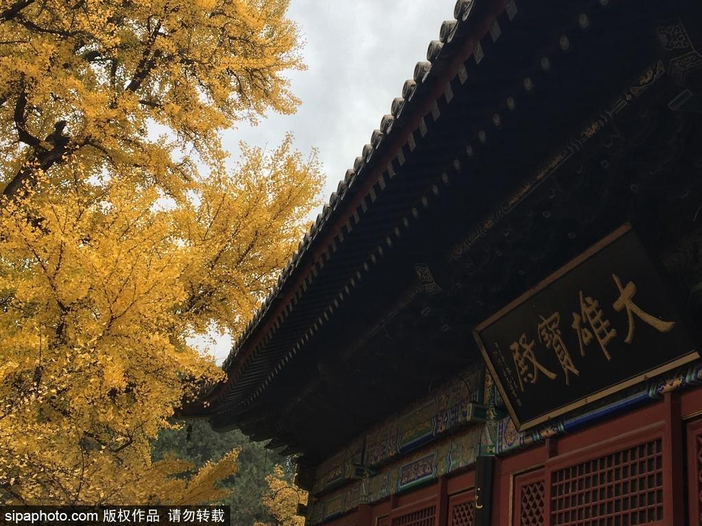 La couleur automnale au Temple Hongluo