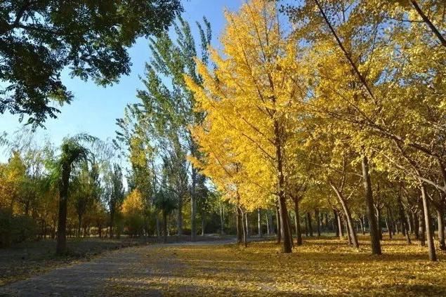 朝阳区周边的公园,就是深受大家的喜爱