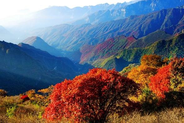 满山红叶层林尽染,京郊红叶观赏地