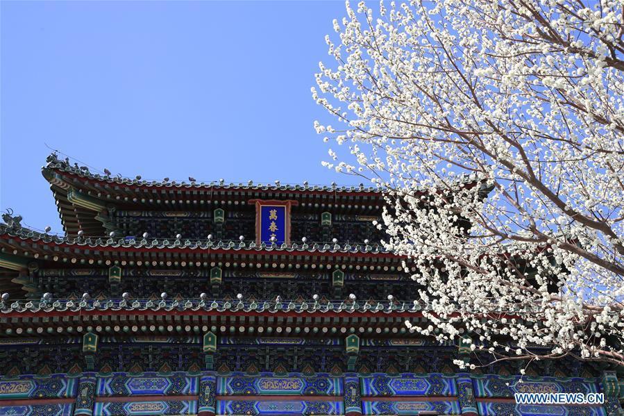 Pêchers en fleurs à Beijing