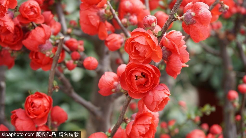Look for Colors of Spring in Taoranting Park