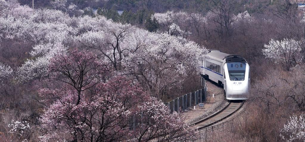 北京这趟8元小火车,带你穿越绝美花海!