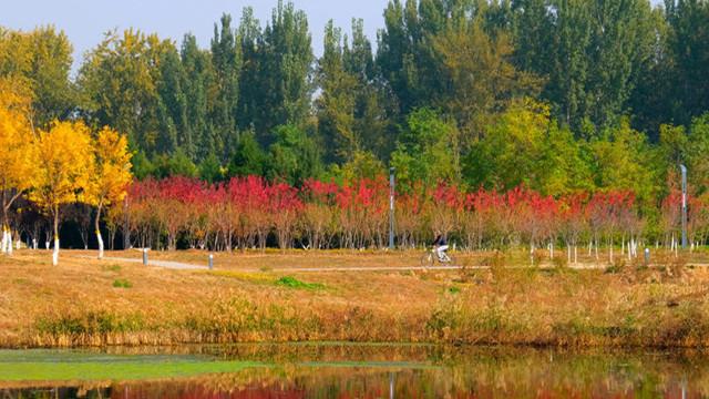 比頤和園大,比奧森好玩,北京這處免費公園還鮮為人知!