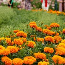 第十一届北京菊花文化节