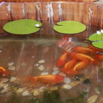 观鱼知乐—宫廷金鱼文化与故宫博物院藏金鱼题材文物联展