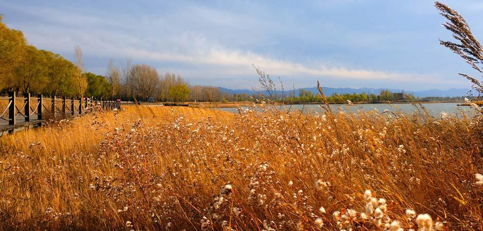澳门葡京赌场初冬最佳拍照地已上线!芦苇景观美哭了