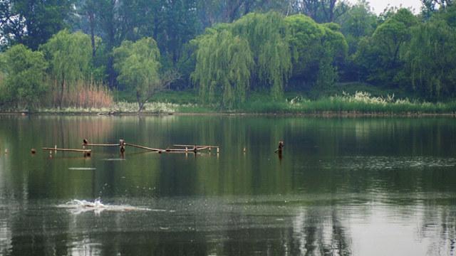免費!北京最神秘的公園,這個時節去剛剛好!難得一見的自然風光