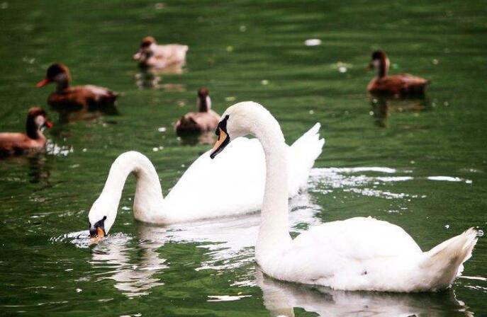 北京动物园水边景色怡人
