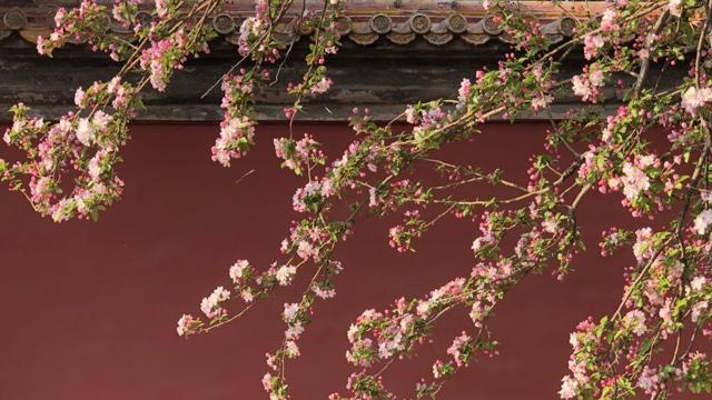 一到四月,故宫就美成了御花园!连刘亦菲、王源都来拍照打卡