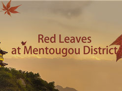 Red Leaves at Mentougou District