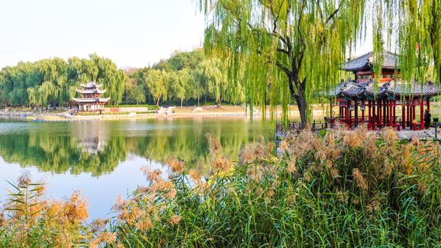 美醉!北京這個公園已化身超美勝境,再不去就來不及了