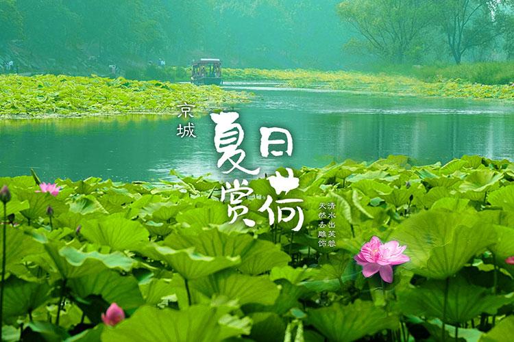 京城夏日赏荷攻略