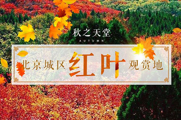 北京城区红叶观赏地