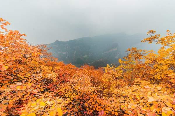 第七届幽岚山坡峰岭红叶节