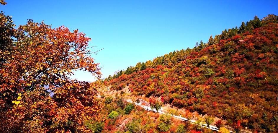 仅剩4天!北京秋季最美路线,一步一景美到哭!错过等一年!