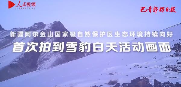 新疆阿尔金山首次拍到雪豹白天活动画面