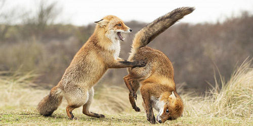 全是戏精!第四届趣味野生动物摄影奖揭晓