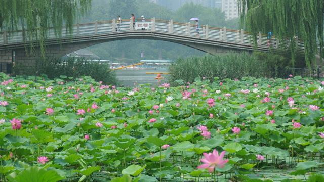 """夏天最美的""""仙子""""就要告别了,北京这6个地方还能看到"""