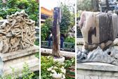 60秒京城文旅|故宫御花园里奇奇怪怪石 像木头像海参又像画