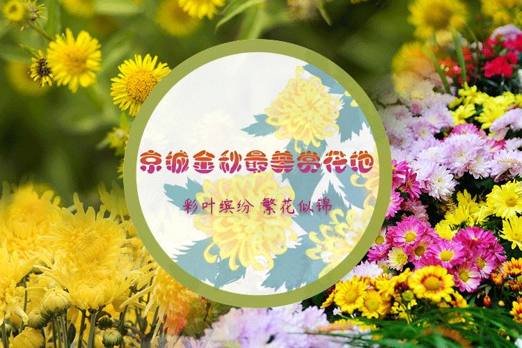 彩叶缤纷 繁花似锦 京城金秋最美赏花地
