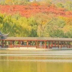 北宫国家森林公园秋景