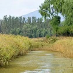 汉石桥湿地秋景