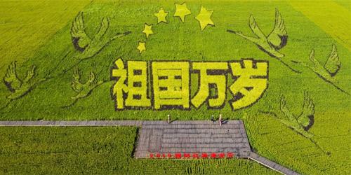 盘点各地巨幅稻田画 献礼新中国70周年华诞