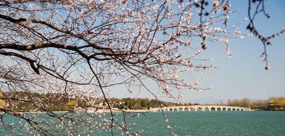 桃花梅花迎春花竞相绽放!北京这个全国知名的公园,来的人都被美哭啦!